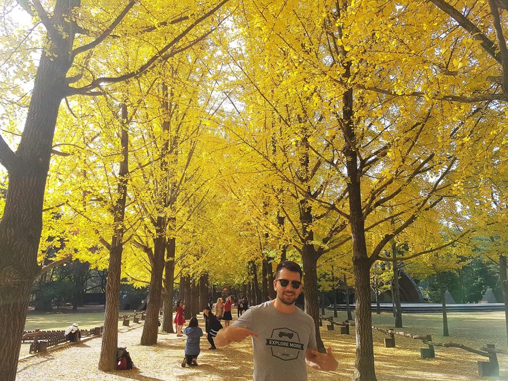 Ginkgo Tree Lane