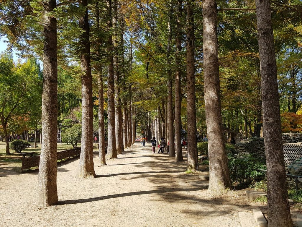 Metasequoia Lane