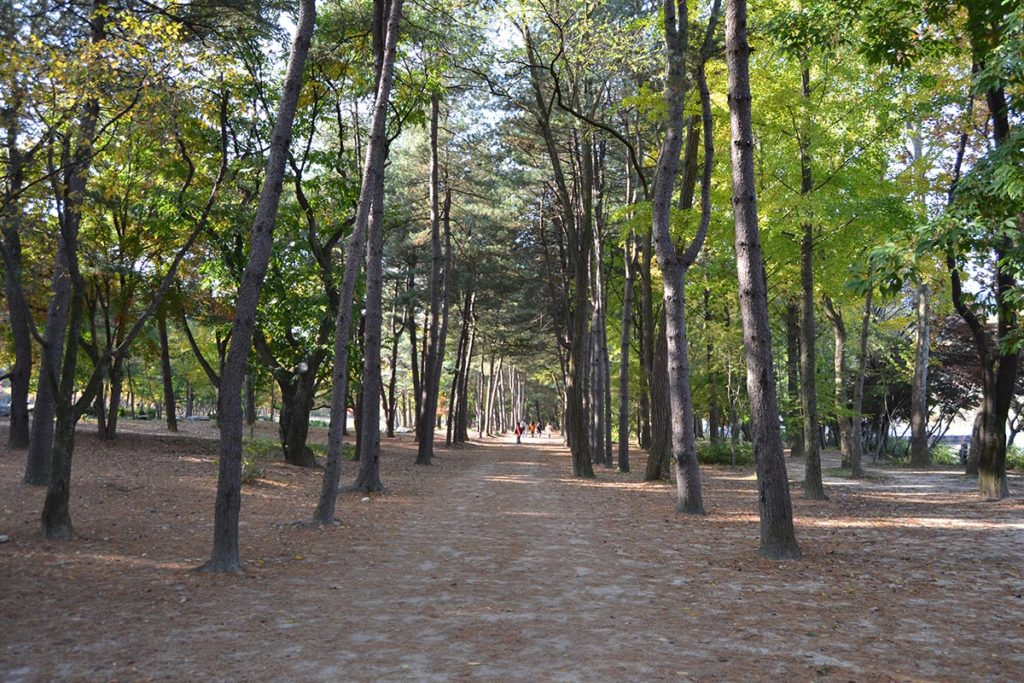 Riverside forest path in the Nami Island